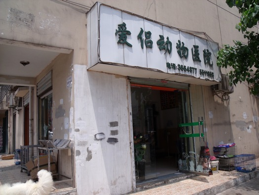 Chinese veterinarian