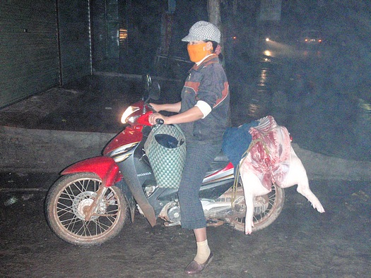 Pig on motorcycle to Vietnamese market
