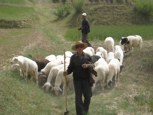Shepherds in Guyuan, Ningxia, China