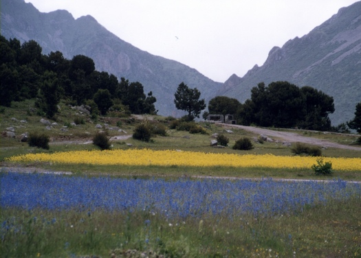 Flower fields near Reting, Tibet