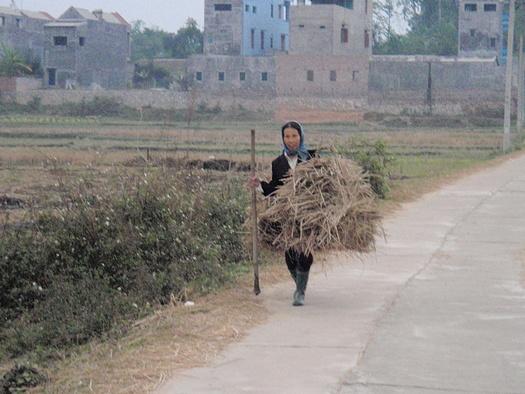 Farmer with hay in Vietnam
