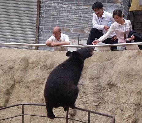 Bear pit at Great Wall of China