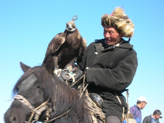 Kazahk and falcon on Mongolian horse