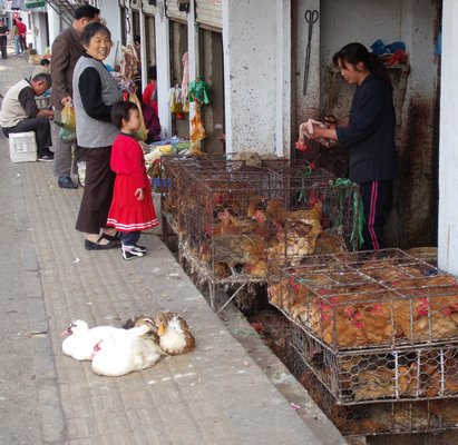 Live chicken stores in China