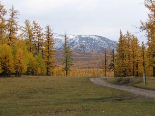 Mongolian forest near mountain