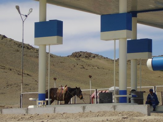 Funny Horse at Mongolian gas station