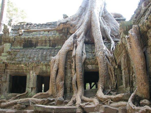 Angkor Wat overgrown